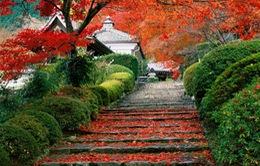 Tuyệt đẹp khung cảnh Nhật Bản mùa thu