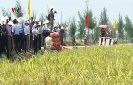 Nhật Bản tìm kiếm cơ hội hợp tác nông nghiệp tại Nam Định