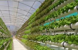 Ngành nông nghiệp Israel thành công nhất trên thế giới