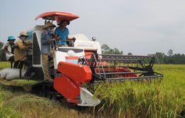 Ngành ngân hàng đẩy mạnh cho vay sản xuất nông nghiệp