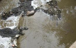 Phú Thọ: Cả làng ngạt thở vì công ty chế biến sắn