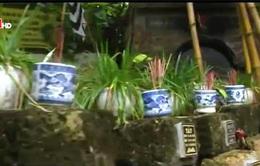 Nghĩa trang cho thú cưng - Hướng kinh doanh mới mẻ ở Việt Nam