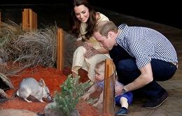 Hoàng tử Anh cảnh báo các thợ săn ảnh