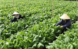 Để nông sản VietGap trụ vững trên thị trường