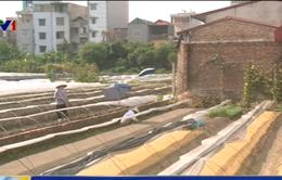 Việt Nam phụ thuộc vào giống cây trồng nhập khẩu