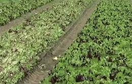 Nông dân Australia nỗ lực xây dựng thương hiệu nông sản