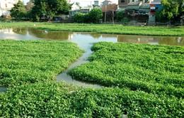 Rau muống, cá rô phi sông Nhuệ nhiễm kim loại nặng