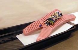 Phát triển robot đàn hồi trong hoạt động cứu hộ