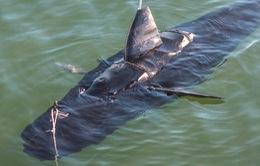Mỹ: Thử nghiệm robot gián điệp cá ngừ