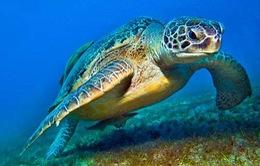 Triệt phá đường dây mua bán rùa biển lớn nhất từ trước đến nay