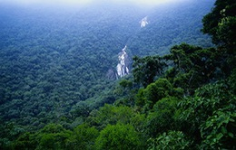 Tình trạng phá rừng Amazon giảm mạnh
