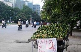 Mạo danh cam Hà Giang bày bán tại Hà Nội