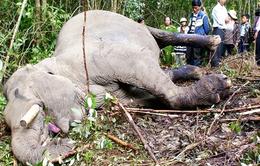 """Đối thoại với đạo diễn của """"Cuộc xung đột giữa người và voi"""""""
