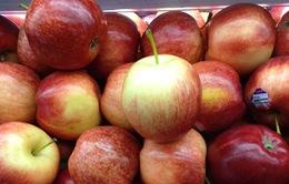 Từ 1/1/2015, dừng nhập khẩu 38 loại hoa quả từ Australia