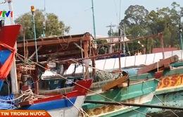Bảo hiểm khai thác hải sản - Vì sao khó tiếp cận?