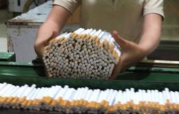Tăng thuế thuốc lá có giảm nhu cầu sử dụng?