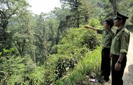 Công tác bảo tồn và bảo vệ rừng còn gặp khó khăn