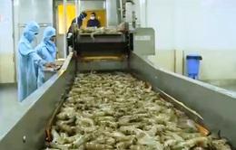 Kiểm tra DN xuất khẩu thuỷ sản bị EU cảnh báo