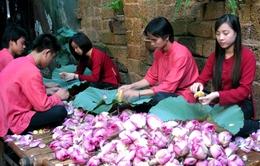 5 triệu đồng/kg trà sen cổ Hà thành: Đắt nhưng không dễ mua