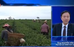 Đất trồng chè ở Lâm Đồng không hề bị nhiễm dioxin