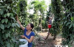12,1 triệu USD thực hiện dự án giảm nghèo vùng cao Quảng Nam
