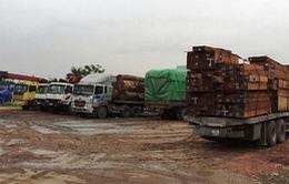 """Bắt 8 xe """"khủng"""" chở gỗ quá tải tại Hải Dương"""