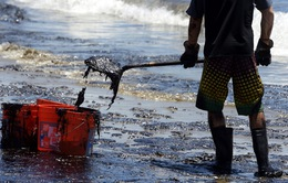 California làm sạch bờ biển sau vụ tràn dầu
