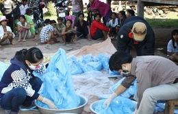 Việt Nam sẽ loại trừ bệnh sốt rét vào năm 2025