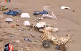 Vũng Tàu: Công viên, bãi tắm biến thành... bãi rác