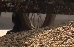 Cà phê sạch: Tiền đề để phát triển cà phê bền vững tại Đăk Lăk