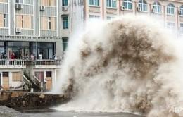 Bão Chan-hom gây thiệt hại nghiêm trọng tại Trung Quốc