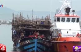 Cứu 31 ngư dân gặp nạn trên biển