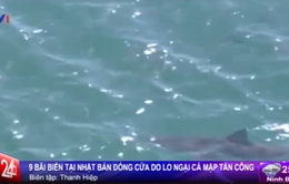 Nhật Bản: Đóng cửa 9 bãi biển do lo ngại cá mập tấn công