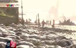 Kinh hoàng hàng nghìn xác bò trôi dạt vào bờ biển Brazil
