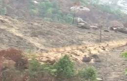 Báo động tình trạng phá rừng làm nương rẫy tại Khánh Hòa