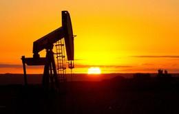 Giá dầu xuống mức thấp nhất trong gần 7 năm qua