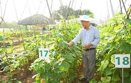 Điểm báo sáng 18/11: Nhà nông Việt trồng rau kiểu Mỹ
