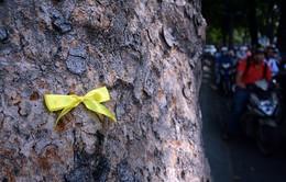 Giới trẻ Sài Gòn gắn ruy băng tạm biệt hàng cây cổ thụ