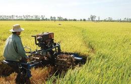 DN Nhật Bản tìm kiếm cơ hội đầu tư nông nghiệp tại Việt Nam