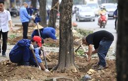 Phó Thủ tướng Hoàng Trung Hải chỉ đạo làm rõ vụ thay thế cây xanh ở Hà Nội