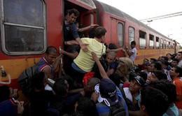 Người di cư Macedonia liều mạng nhảy tàu đến Serbia