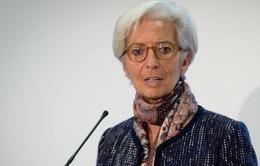 Giám đốc IMF dự đoán ra sao về kinh tế thế giới năm 2016?