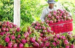 Xuất khẩu trái cây tăng