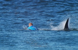 VĐV lướt ván đấm túi bụi vào đầu cá mập thoát thân