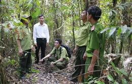 Cà Mau: Gần 32.000ha rừng ở cấp báo cháy cực kỳ nguy hiểm