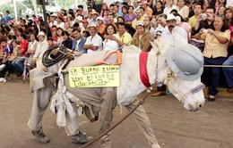 Lễ hội tôn vinh những chú lừa ở Mexico