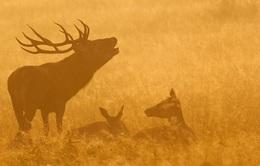 Thế giới động vật hoang dã nằm giữa chốn đô thị náo nhiệt