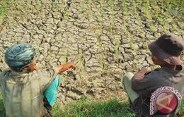 Indonesia đối mặt với hạn hán tồi tệ nhất 5 năm qua