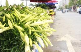 Hoa loa kèn tinh khôi  tô điểm phố phường Hà Nội