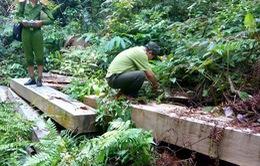 Bắt tạm giam 5 đối tượng liên quan đến vụ phá rừng Bà Nà-Núi Chúa